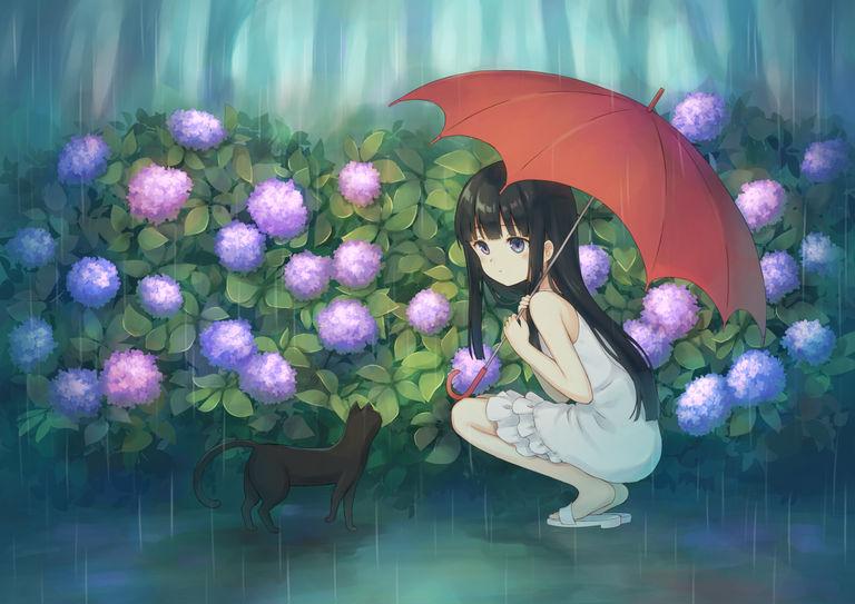 Drawings of Hydrangea  - Calm in Bloom.